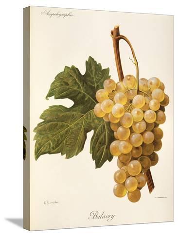 Balavry Grape-A. Kreyder-Stretched Canvas Print