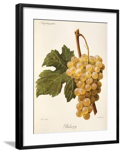 Balavry Grape-A. Kreyder-Framed Art Print