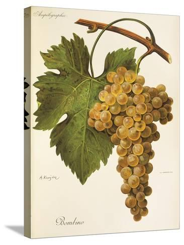 Bombino Grape-A. Kreyder-Stretched Canvas Print