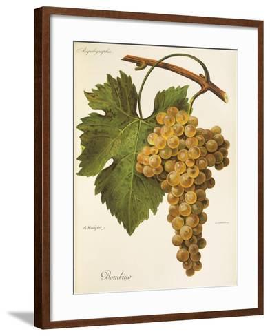 Bombino Grape-A. Kreyder-Framed Art Print