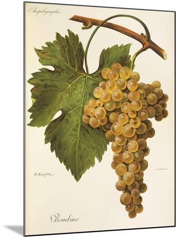Bombino Grape-A. Kreyder-Mounted Giclee Print