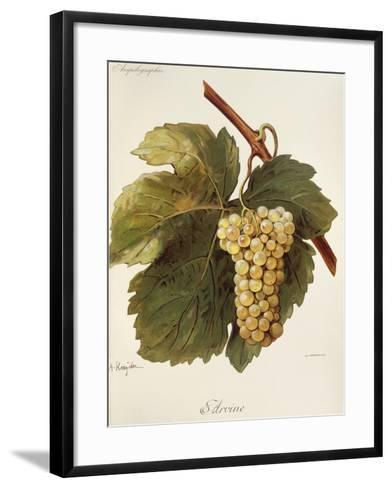 Arvine Grape-A. Kreyder-Framed Art Print