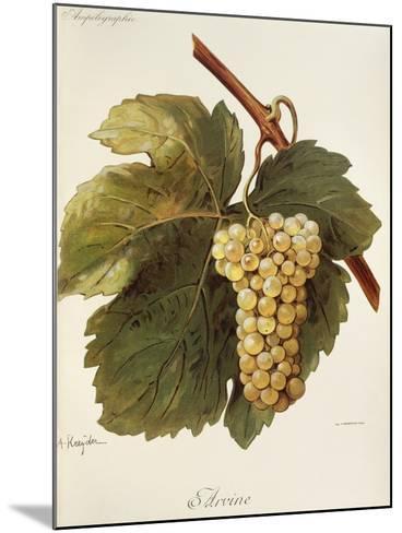 Arvine Grape-A. Kreyder-Mounted Giclee Print
