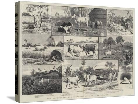 The Adventures and Misadventures of a Brahma Bull-Adrien Emmanuel Marie-Stretched Canvas Print