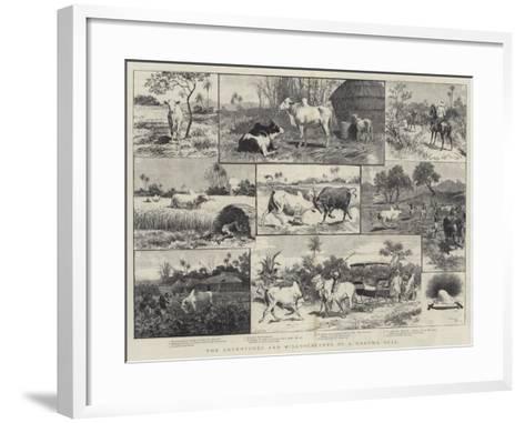The Adventures and Misadventures of a Brahma Bull-Adrien Emmanuel Marie-Framed Art Print