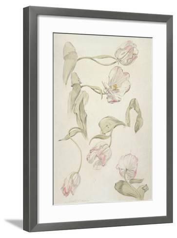 Tulips-Albert Williams-Framed Art Print