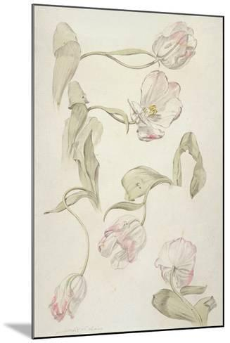 Tulips-Albert Williams-Mounted Giclee Print