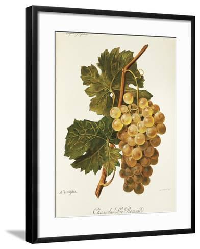 Chasselas Le Ronsard Grape-A. Kreyder-Framed Art Print