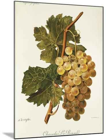 Chasselas Le Ronsard Grape-A. Kreyder-Mounted Giclee Print