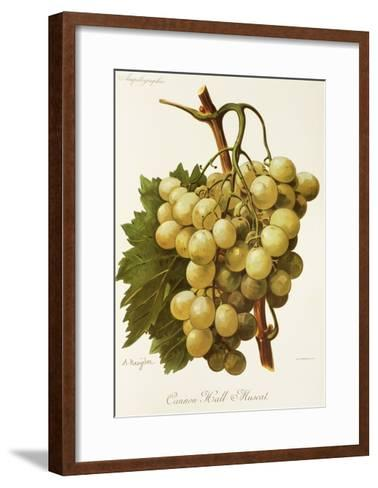 Cannon Hall Muscat Grape-A. Kreyder-Framed Art Print