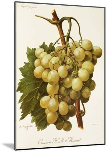Cannon Hall Muscat Grape-A. Kreyder-Mounted Giclee Print