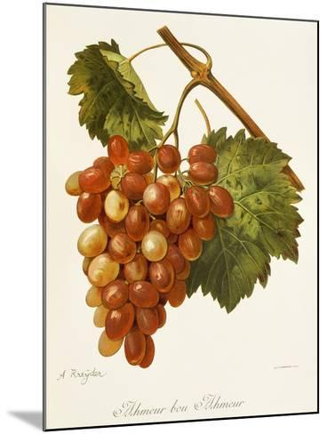 Ahmeur Bou Hameur Grape-A. Kreyder-Mounted Giclee Print
