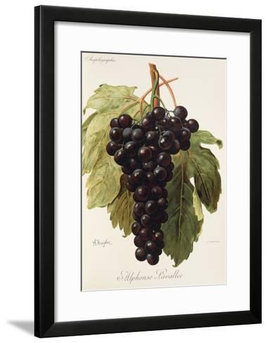 Alphonse Lavallee Grape-A. Kreyder-Framed Art Print