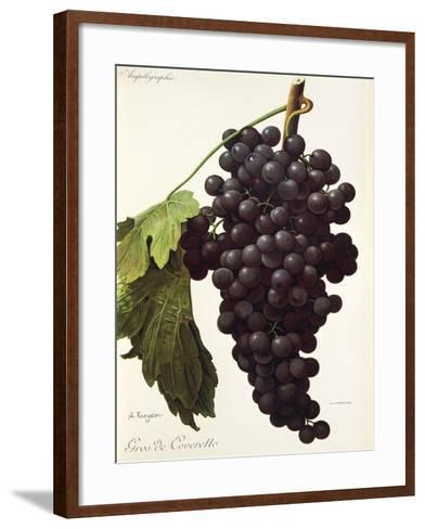 Gros De Coveretto Grape-A. Kreyder-Framed Art Print