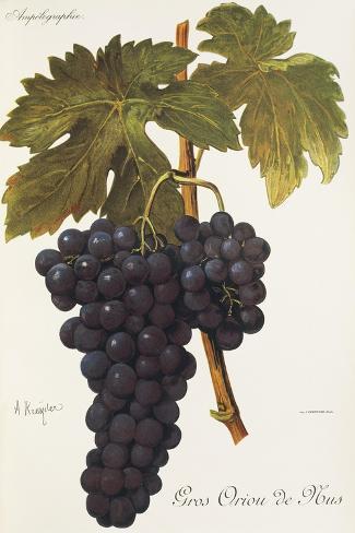 Gros Oriou De Mus Grape-A. Kreyder-Stretched Canvas Print
