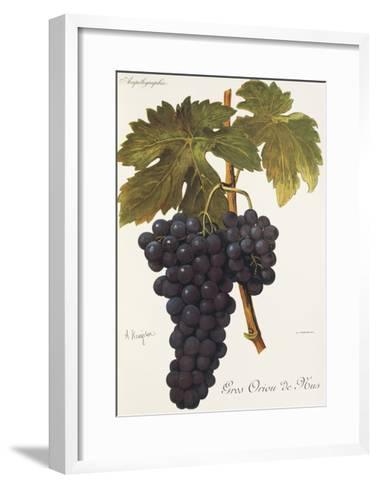 Gros Oriou De Mus Grape-A. Kreyder-Framed Art Print