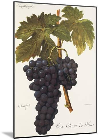 Gros Oriou De Mus Grape-A. Kreyder-Mounted Giclee Print