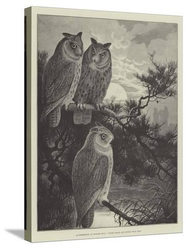 A Conference of Horned Owls, Three Heads are Better Than One-Alexander Francis Lydon-Stretched Canvas Print