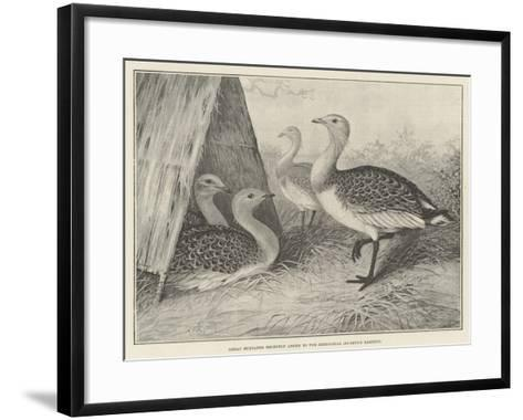 Great Bustards Recently Added to the Zoological Society's Gardens-Alexander Francis Lydon-Framed Art Print