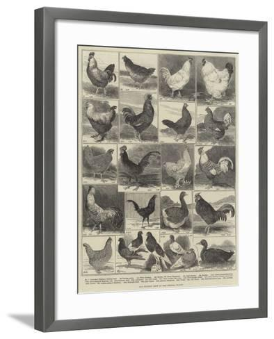 The Poultry Show at the Crystal Palace-Alfred Courbould-Framed Art Print