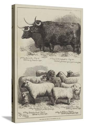 Prize Cattle and Sheep at the Smithfield Club Show-Alfred Sheldon-Williams-Stretched Canvas Print