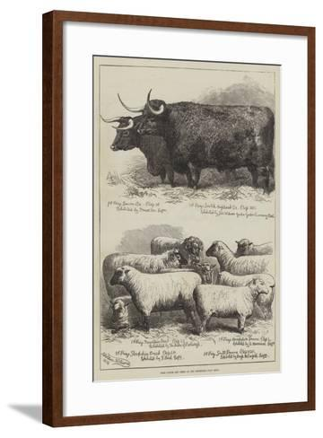 Prize Cattle and Sheep at the Smithfield Club Show-Alfred Sheldon-Williams-Framed Art Print