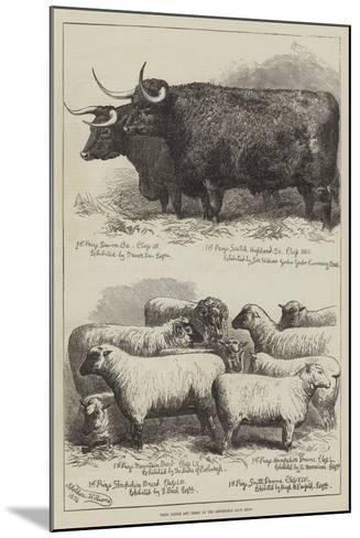 Prize Cattle and Sheep at the Smithfield Club Show-Alfred Sheldon-Williams-Mounted Giclee Print