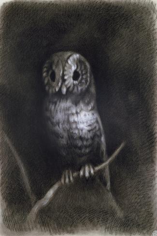 Owl-Andrea Mantegna-Stretched Canvas Print