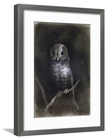 Owl-Andrea Mantegna-Framed Art Print