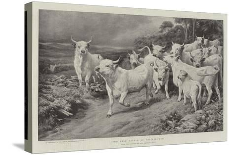 The Wild Cattle of Chillingham-Basil Bradley-Stretched Canvas Print
