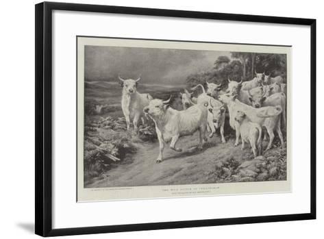 The Wild Cattle of Chillingham-Basil Bradley-Framed Art Print