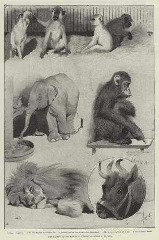 Some Members of the Barnum and Bailey Menagerie at Olympia-Cecil Aldin-Stretched Canvas Print