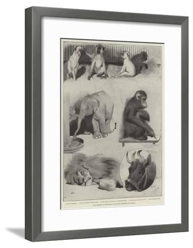 Some Members of the Barnum and Bailey Menagerie at Olympia-Cecil Aldin-Framed Art Print