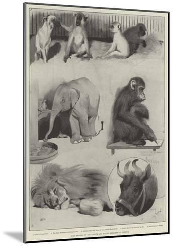 Some Members of the Barnum and Bailey Menagerie at Olympia-Cecil Aldin-Mounted Giclee Print