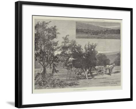 Fruit-Gathering in California-Charles Auguste Loye-Framed Art Print