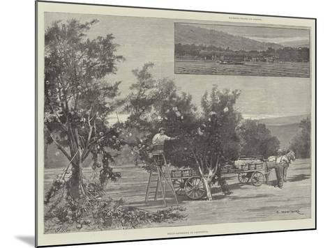 Fruit-Gathering in California-Charles Auguste Loye-Mounted Giclee Print