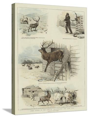 Some Scenes in the Life of Sutherland, Our Tame Stag-Charles Burton Barber-Stretched Canvas Print