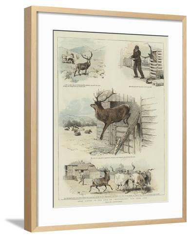 Some Scenes in the Life of Sutherland, Our Tame Stag-Charles Burton Barber-Framed Art Print