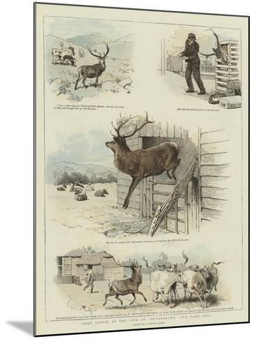 Some Scenes in the Life of Sutherland, Our Tame Stag-Charles Burton Barber-Mounted Giclee Print