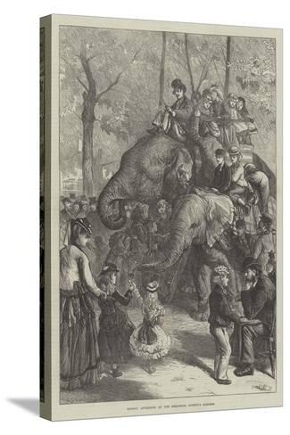 Monday Afternoon at the Zoological Society's Gardens-Charles Joseph Staniland-Stretched Canvas Print