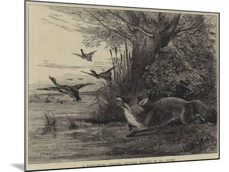 A Four-Legged Poacher, Reynard Baulked of His Dinner-Charles Harvey Weigall-Mounted Giclee Print