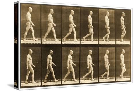 Image Sequence of a Nude Man Walking, 'Animal Locomotion' Series, C.1881-Eadweard Muybridge-Stretched Canvas Print