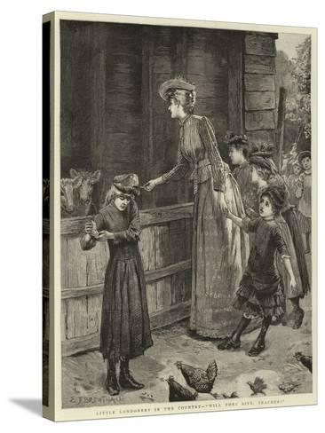 Little Londoners in the Country, Will They Bite, Teacher?-Edward Frederick Brewtnall-Stretched Canvas Print