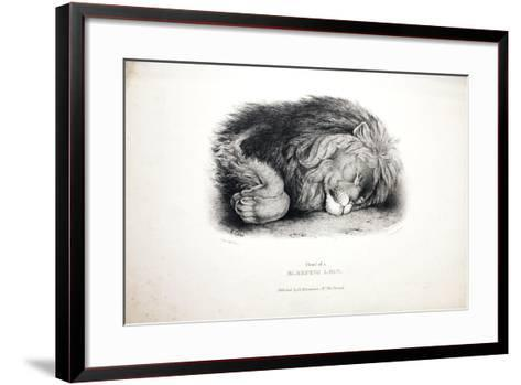 Sketches of Animals at the Zoological Gardens-Edward Lear-Framed Art Print