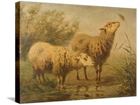Study of Sheep-Edouard Woutermaertens-Stretched Canvas Print