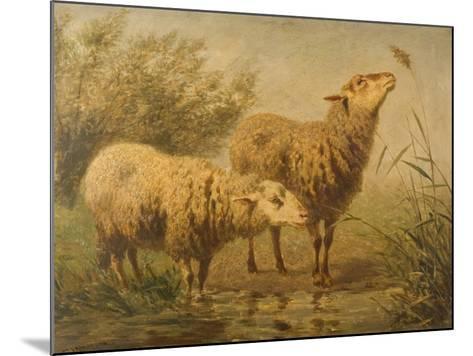 Study of Sheep-Edouard Woutermaertens-Mounted Giclee Print