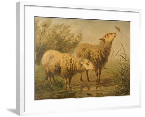 Study of Sheep-Edouard Woutermaertens-Framed Art Print