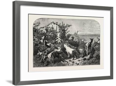 Salon of 1855, Goats, 1855-Filippo Palizzi-Framed Art Print
