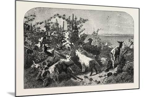 Salon of 1855, Goats, 1855-Filippo Palizzi-Mounted Giclee Print