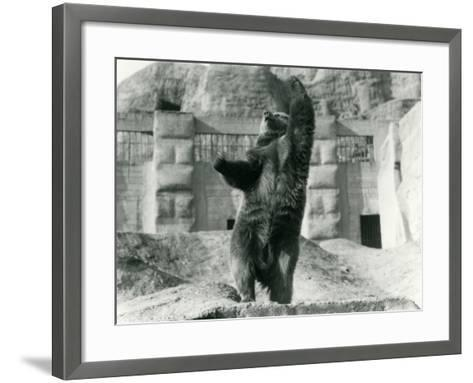 A Brown Bear Stands Upright on its Hind Legs-Frederick William Bond-Framed Art Print